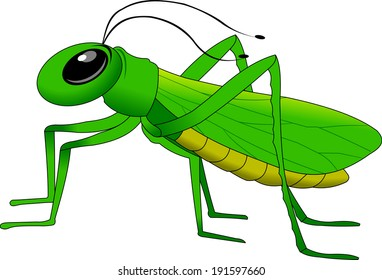cheerful, small, green grasshopper vector and illustration