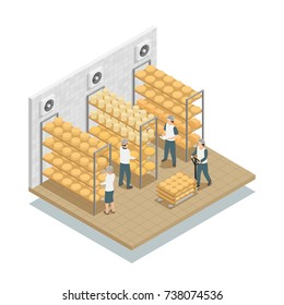 Cheese aging  in controlled conditions storage shelves in dairy factory with working personnel isometric composition vector illustration