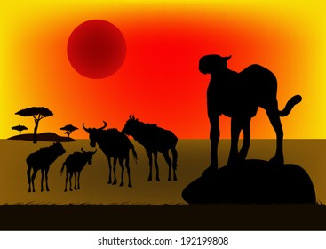 Cheetah in Africa at sunset.vector
