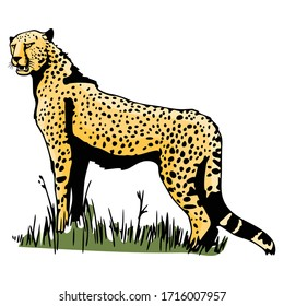 Cheetah Animal Vector Illustration Template Icon Collection