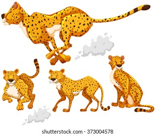 Cheetah in four different actions illustration