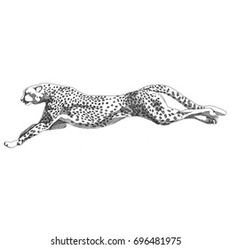 Cheetah running sketch vector graphics black and white monochrome