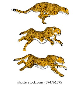 Cheetahs. Set of three colored vector images