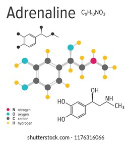 Chemical formula, structure and model of the adrenaline molecule, vector illustration