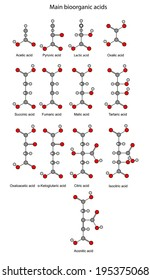 Chemical formulas of  bioorganic acids (acetic, pyruvic, lactic, succinic, fumaric, malic, tartaric, oxalic, oxaloacetic, ketoglutaric, citric, isocitric, aconitic), illustration, rounds and sticks