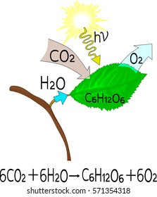 Photosynthesis diagram images stock photos vectors shutterstock chemical reaction of photosynthesis ccuart Choice Image