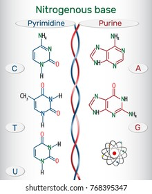 Chemical structural formulas of purine and pyrimidine nitrogenous bases: adenine (A, Ade), guanine (G, Gua) , thymine (T, Thy), uracil (U), cytosine (C)).  Vector illustration