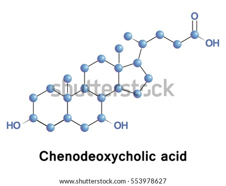 Chenodeoxycholic Acid One Main Bile Acids Stock Vector (Royalty Free ...