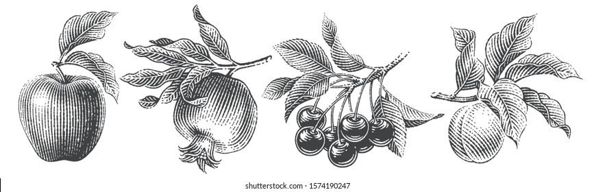 Cherries, apple, apricot and pomegranate composition set. Hand drawn engraving style illustrations.
