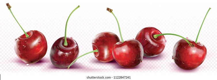 Cherries are placed in a line on transparent background. Vector illustration