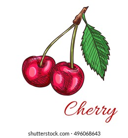 Cherry berries. Isolated bunch of cherries on stem with leaves. Fruit and berry product emblem for juice or jam label, packaging sticker, grocery shop tag, farm store