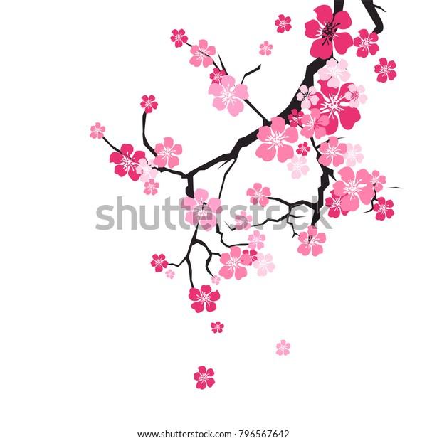 Цветение вишни Фон Сакура Цветы Розовый На Филиал Плоский Векторный Иллюстрация