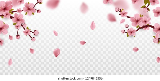 Cherry Blossom branch. Sakura flowers Isolated on white. Spring. Vector
