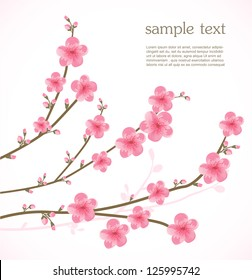 фотообои Cherry blossom card