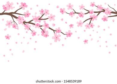 Cherry blossom and falling flower on white background vector illustration. Sakura Japanese flower.