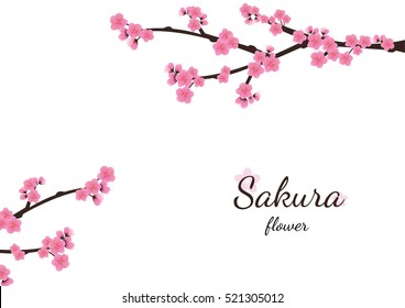 Cherry blossom flowers background. Sakura