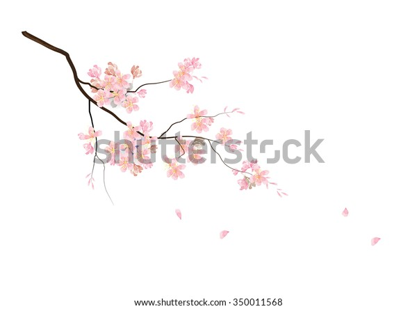 Cherry Blossom Flowers Branch Pink Color Stock Vector Royalty Free
