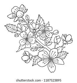 Cherry blossom flowers and branch vector illustration. Drawing for the coloring book or page for kids or adults.