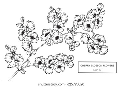 Cherry blossom flowers drawing and sketch with line-art on white backgrounds.
