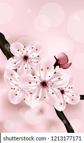 Cherry blossom on pink background.