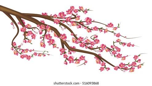 Cherry Blossom.  Sakura branch isolated on white background. Vector illustration of sakura tree with flowers.