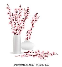 Cherry blossom, sakura branches in vases on white background. Flower arrangement. Flower of Springtime. Vector illustration.