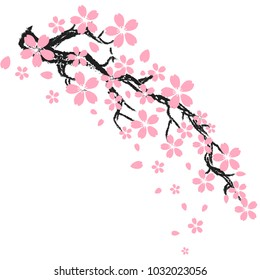фотообои Cherry blossom or sakura flowers of japan ,tree branch on white background with copy space , vector,illustration , image.