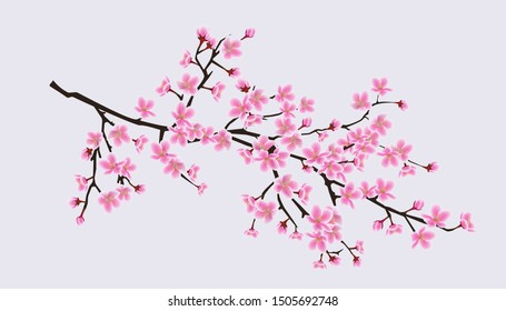 Cherry blossom sakura tree branch with realistic pink flowers - beautiful realistic spring symbol with decorative floral petals. Isolated vector illustration.