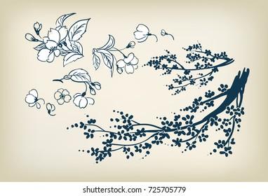 cherry blossom sakura vector sketch illustration design elements