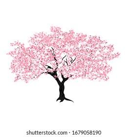 cherry blossom tree, vector illustration