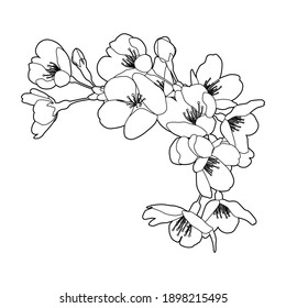Cherry blossoms, line drawing illustration. Corner, frame decoration (black and white, line drawing, white background, flowers: vector without white fill)