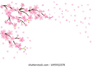 Cherry blossoms, spring flower garden vector illustration on white background ,Japanese sakura flowers