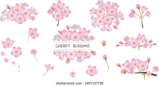 cherry blossoms vector seamless background image