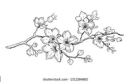 Japanese Cherry Blossom Tattoo Images Stock Photos Vectors