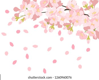 Cherry illustration, background image