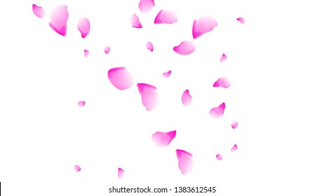 Cherry petals. Pink flying petals. Flower design.Spring pattern. Delicate style.