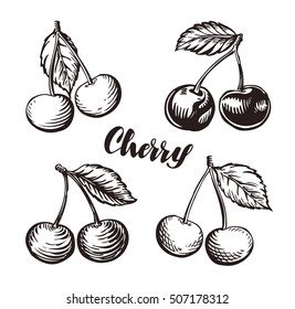 Cherry sketch. Fruits vector illustration