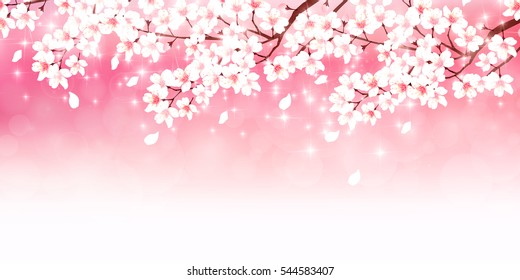 Cherry spring flower background