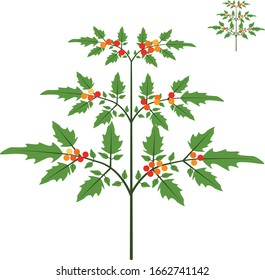 Cherry tomato plant with red orange and yellow fruit