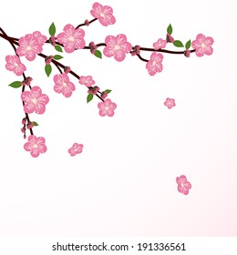 Cherry tree blossom with falling flower, illustration.