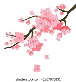 Cherry tree branches, vector illustration of a spring flower garden with a white background, Japanese cherry blossoms.