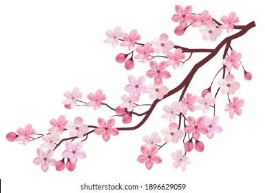 Cherry tree flower spring icon