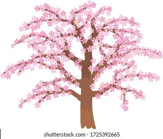 It is a cherry tree in full bloom.
