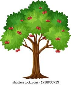 Cherry tree isolated on white background illustration