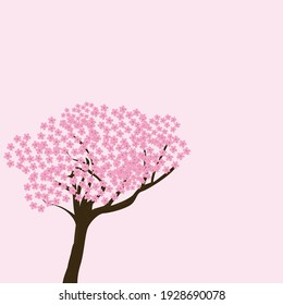 cherry tree on pink background