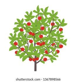 Cherry tree. Vector illustration. Cherries fruit tree plant. Flat vector color Illustration clipart. Ripe red Prunus on a tree.
