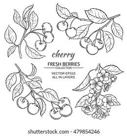 cherry vector set  on white background