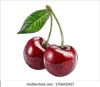 Сherry, cherry-tree vector engraved style illustration for posters, decoration and print. Hand drawn etching sketch of passion fruit in colorful. Detailed vegetarian food linocut drawing.