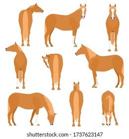 chestnut horse various pose set