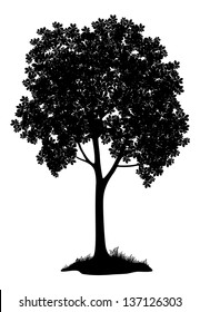Chestnut tree, black silhouette on white background. Vector